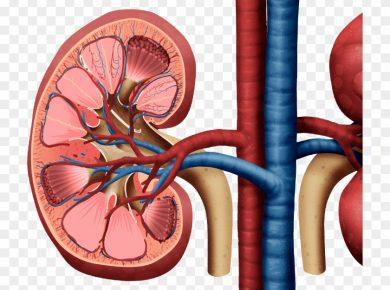 5 Best tips for maintaining kidney health