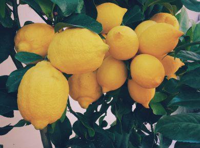 The uses of lemon