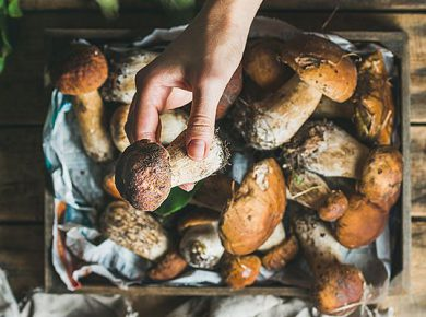 5 Reasons To Forage For A Vegan Diet